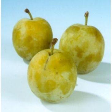 Prunus d Dubbele boerenwitte - zoete pruim