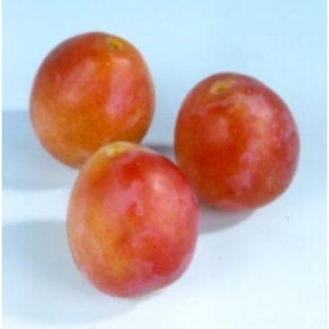 Prunus 'Early Laxton'