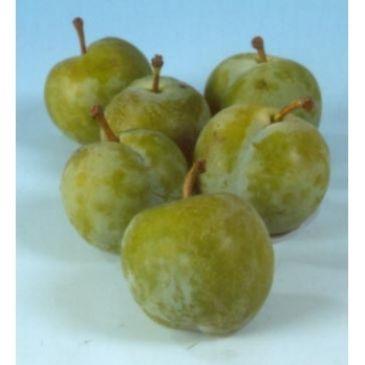 Pruim - Prunus d Reine Claude Verte