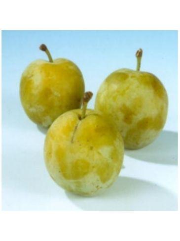 Prunus d. 'Dubbele Boerenwitte' Zoete pruim